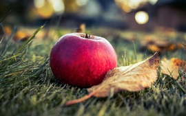 Preview wallpaper Red apple, grass, leaf