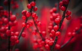 Red berries, fruit, twigs