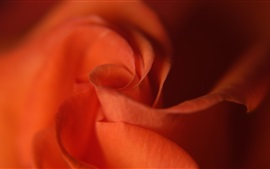 Preview wallpaper Red rose close-up, blurry