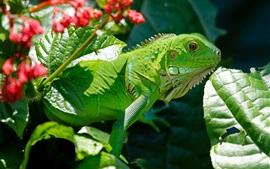 Réptil, lagarto, verde, folhas