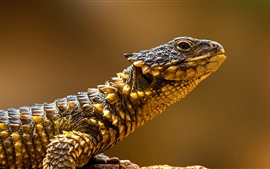 Preview wallpaper Reptiles, lizard side view