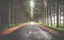 Preview wallpaper Road, trees