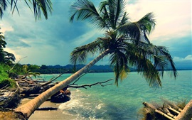 Preview wallpaper Sea, palm tree, sunshine