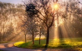 Preview wallpaper Spring, trees, flowers, grass, sun rays