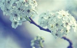 Primavera, flores brancas, galhos, bokeh