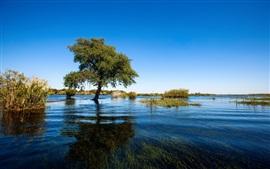 Été, arbre, herbe, lac, eau claire