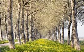 Aperçu fond d'écran Été, arbres, fleurs