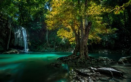 Thailand, waterfall, trees, creek