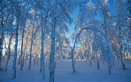 Preview wallpaper Thick snow, trees, forest, winter, sunlight
