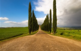 Toscana, Italie, arbres, route