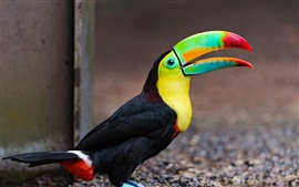 Preview wallpaper Toucan, beak, bird