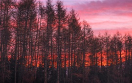 Preview wallpaper Trees, red sky, sunset