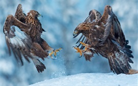 Preview wallpaper Two birds, eagle, winter, snow