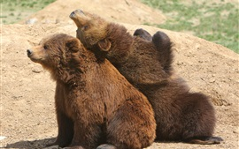Two brown bears playful