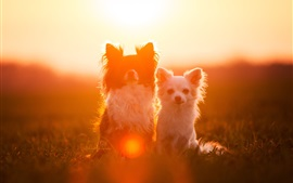 Preview wallpaper Two dogs, friends, under sun, glare