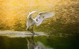 Preview wallpaper White bird, egret, fishing, lake, water
