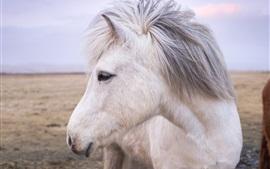 Aperçu fond d'écran Vue frontale du cheval blanc, tête, crinière