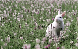 Preview wallpaper White rabbit in the wildflowers