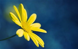 Yellow flower, blue background