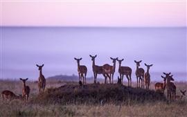 Preview wallpaper Africa, antelope, Kenya, Masai Mara National Reserve