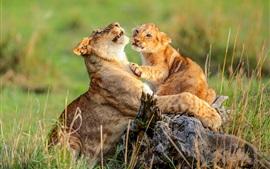 Africano, leoa e filhote, vida selvagem