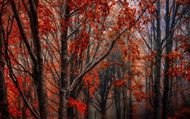 Preview wallpaper Autumn, forest, trees, red leaves, fog