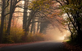 Preview wallpaper Autumn, forest, trees, road, fog, leaves