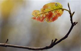 Осень, один лист, ветки