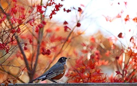 Preview wallpaper Autumn, trees background, bird