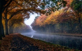 Autumn, trees, foliage, river, haze