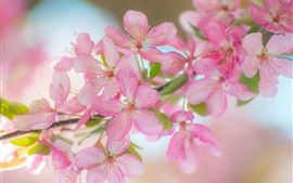 Preview wallpaper Beautiful pink apple flowers, twigs, spring