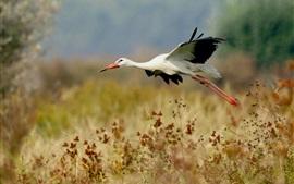 Полет птичьего аиста