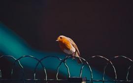 Pássaro, cerca de arame