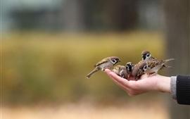 壁紙のプレビュー 手に鳥たち