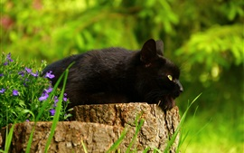 Black cat rest, stump, flowers