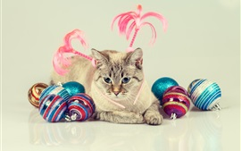 Preview wallpaper Blue eyes cat and colorful balls