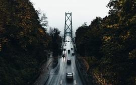 Puente, mojado, carretera, coches, árboles, otoño