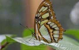 Фотография бабочки, крылья