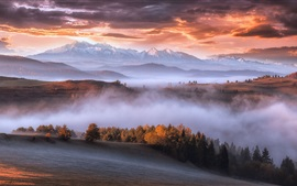 Preview wallpaper Carpathians, mountains, trees, fog, morning, autumn
