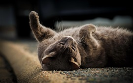 Cat lying on ground, playful