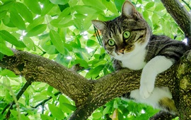 Preview wallpaper Cat on tree, green foliage