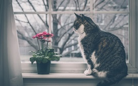 Preview wallpaper Cat sit at windowsill, window, gerbera flowers