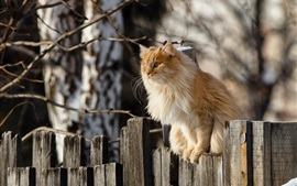 Preview wallpaper Cat standing on fence top