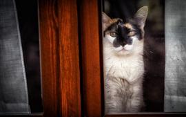 Gato, madeira, janela