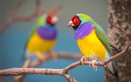 Preview wallpaper Colorful feathers parrot