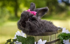 Cute black rabbit, pets