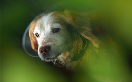 Dog, face, bokeh