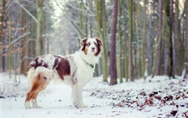 Dog, winter, trees, snow
