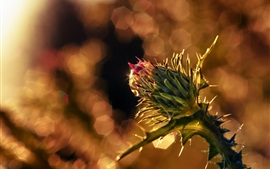Preview wallpaper Flower bud macro photography, glare