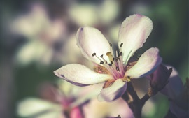 Preview wallpaper Flowers bloom, spring, white petals